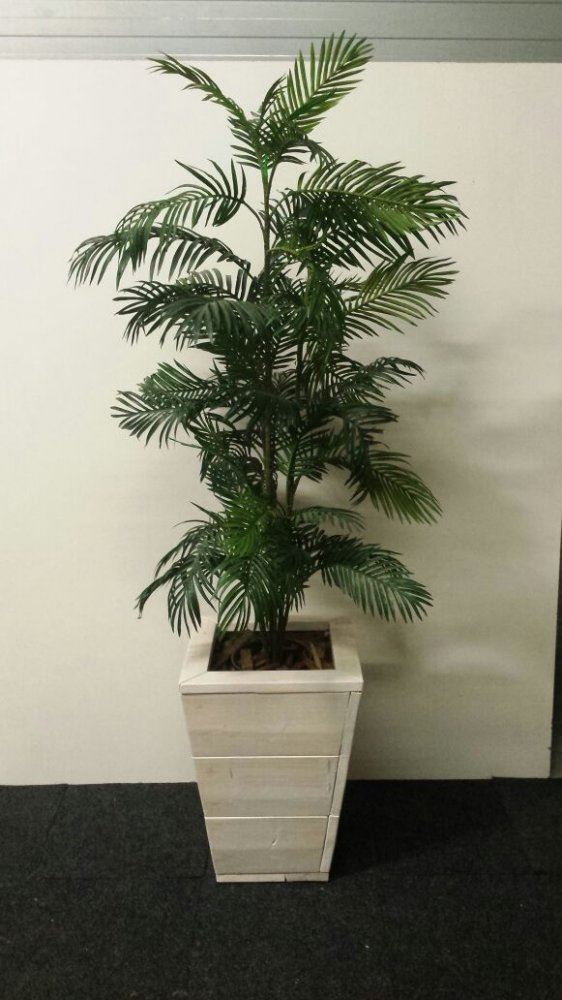 Palm in steigerhouten pot